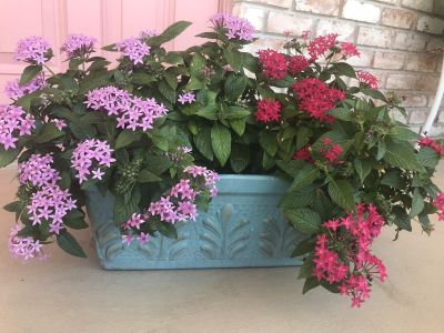 Terra-cotta window box with blooms- hand painted
