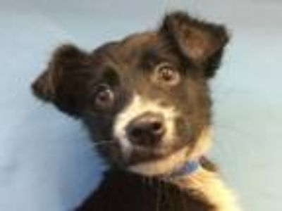 Adopt Harry a Terrier, Mixed Breed