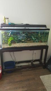 Fish tank with fish. (About 9 fish)