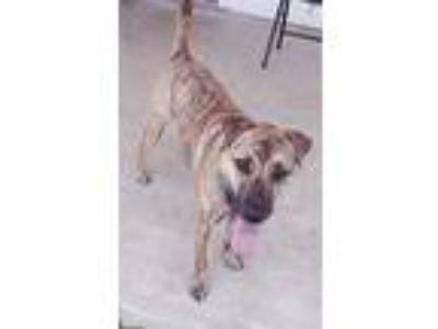 Adopt April a Brindle Catahoula Leopard Dog / Mixed dog in Killeen
