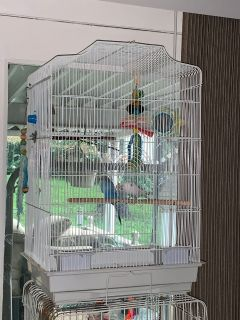 Bird cage and more