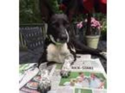 Adopt Frank S. a Shepherd, Pointer