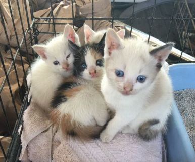 Kittens Ready For Adoption