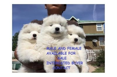 Craigslist Animals And Pets For Adoption Classifieds In Slocomb