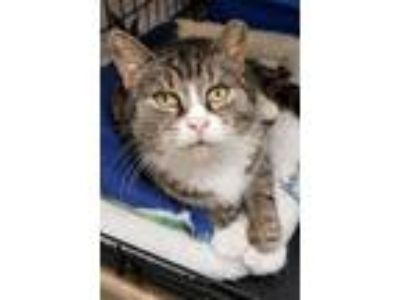 Adopt Sundae (FCID# 05/07/2019 - 131 Levittown PS) a Brown or Chocolate (Mostly)