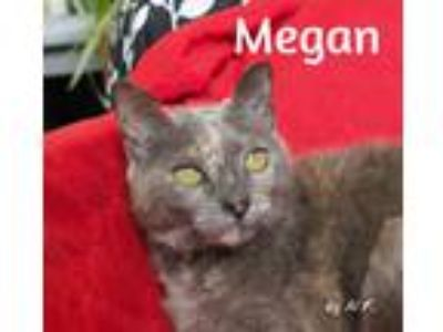 Adopt Megan a Gray or Blue (Mostly) Domestic Shorthair (short coat) cat in