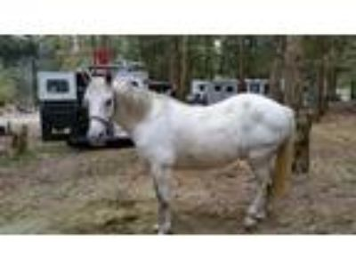 Excellent trail mare for sale