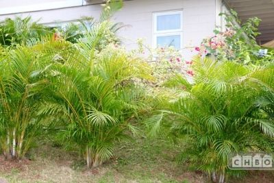 $4500 3 single-family home in Kailua