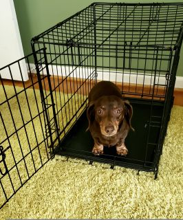 "Frisco heavy duty Dog Crate 24.5""L x 17.5""W x 9.5""H"