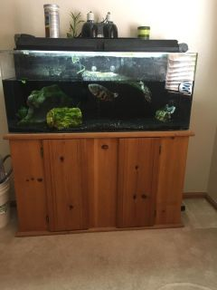55 gallon fish tank with fish, turtle and accessories