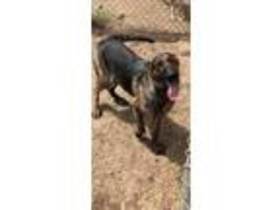 Adopt Minnie (JO/JO) a Shepherd (Unknown Type) / Mixed dog in Albany