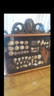 Sea shell display hanger. Wood frame and glass covered.