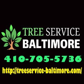 Clipper City Tree Service