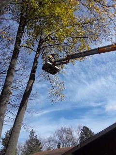 Lowest Cost Tree Removal