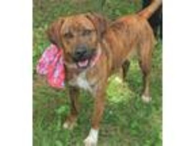 Adopt Libby a Black Mouth Cur