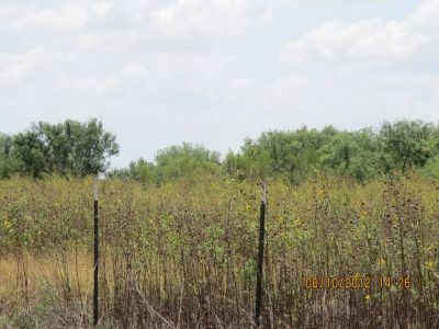 $161000.00 22.84 Acres of framland(La Villa, Texas) (About 6.0 miles  ( (About 6.0 miles (N) on FM 491)