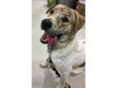 Adopt Jordan a White Mixed Breed (Large) / Mixed dog in Vienna, OH (24520467)