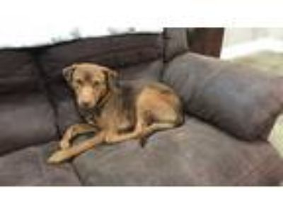 Adopt Baylor a Hound (Unknown Type) / Mixed dog in New Orleans, LA (25582015)