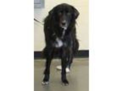 Adopt Pen 106c Lola a Border Collie