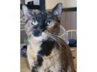 Adopt Freedia a Tortoiseshell Calico cat in Oakland, CA (25888723)