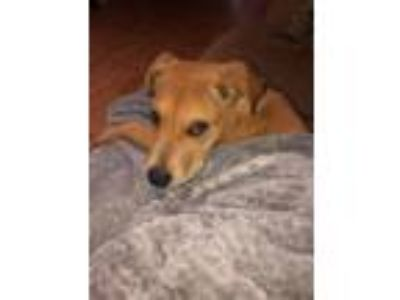 Craigslist Animals And Pets For Adoption Classified Ads In San