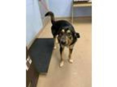 Adopt Larkspur a Mixed Breed