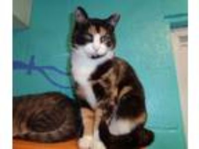 Adopt MAPLE SYRUP a Calico