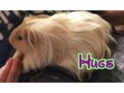 Adopt Hugs & Kisses a Guinea Pig