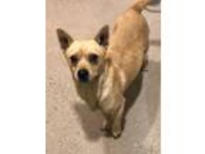 Adopt GEPPETTO a Terrier (Unknown Type, Small) / Mixed dog in Redwood City