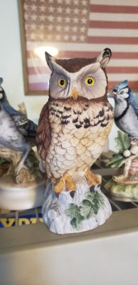 Owl by Andrea