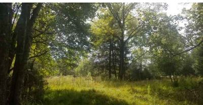 1109 Country Corners CT Blairsville, Nice level wooded lot.
