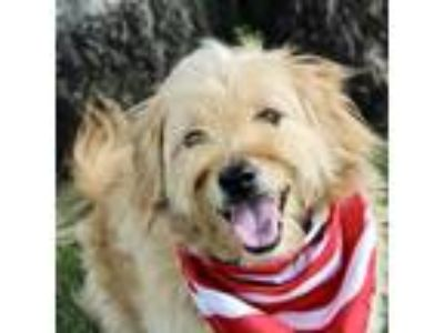 Adopt Max a Tan/Yellow/Fawn Terrier (Unknown Type, Small) / Mixed dog in Largo