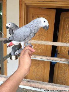 Craigslist - Birds for Adoption Classifieds in Myrtle Beach