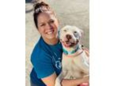 Adopt Dove a American Staffordshire Terrier, Bull Terrier