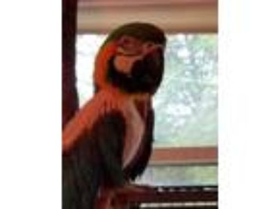 Craigslist - Birds for Adoption Classifieds in New Haven