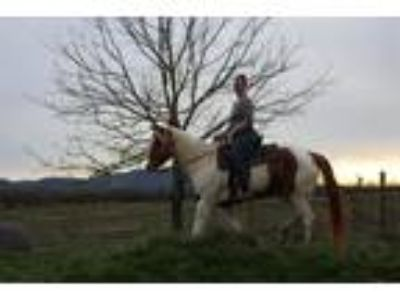 Excellent Trail Horse This mare is eager to please