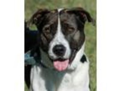Adopt Emerald 471 a Black Hound (Unknown Type) / Shepherd (Unknown Type) / Mixed