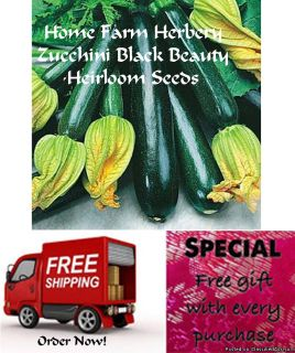 Zucchini Black Beauty (Squash) Seeds, Order now, FREE shipping + free gift
