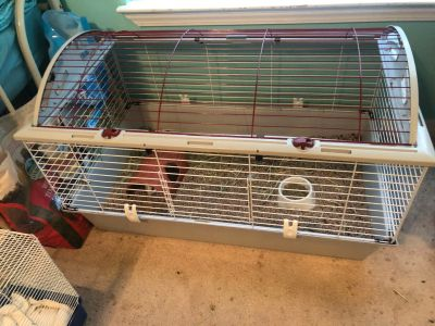 2 young male guinea pigs with BIG cage to grow into