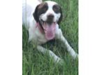 Adopt Sash a Pointer