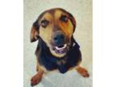 Adopt Prince Charming a Hound, Mixed Breed