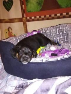 Mutt DOG FOR ADOPTION ADN-96699 - adorable