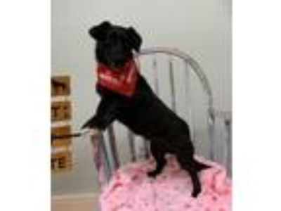 Adopt Zelda a Dachshund / Mixed dog in Meridian, MS (25854561)
