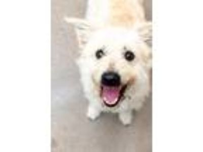Adopt GONZO a Terrier (Unknown Type, Small) / Mixed dog in Redwood City