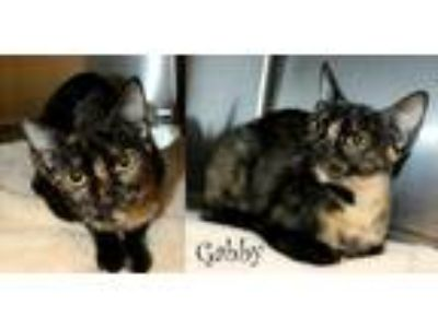 Adopt Gabby a Tortoiseshell Domestic Shorthair / Mixed cat in Shreveport