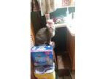 Adopt Marla a Calico or Dilute Calico Calico / Mixed cat in Vassar