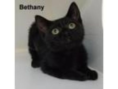 Adopt Bethany a All Black Domestic Shorthair cat in Madisonville, TN (25861478)