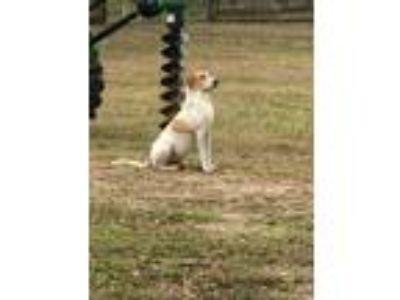 Adopt Kennedy a Foxhound
