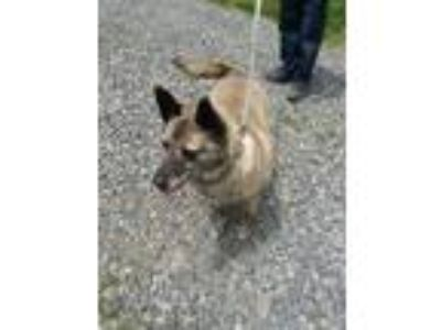 Adopt Chance zombie a German Shepherd Dog