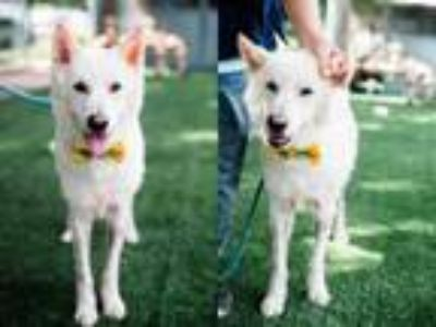 Adopt TOMMY a Mixed Breed